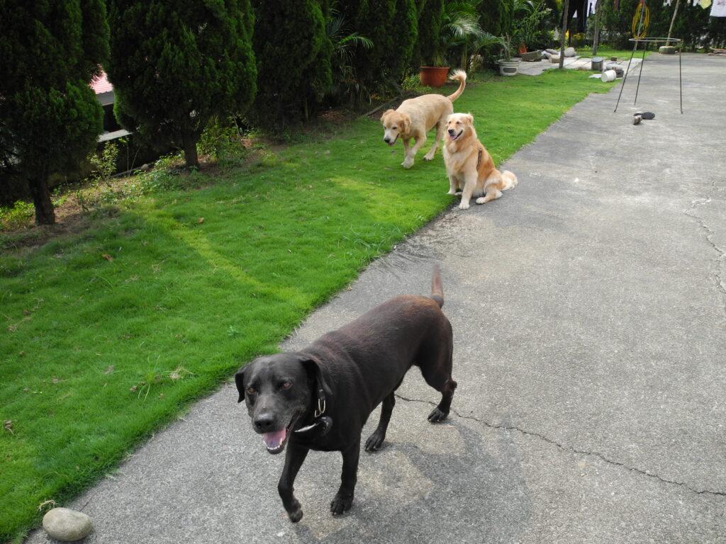 外出遛狗,飼主應採取適當防護措施 2
