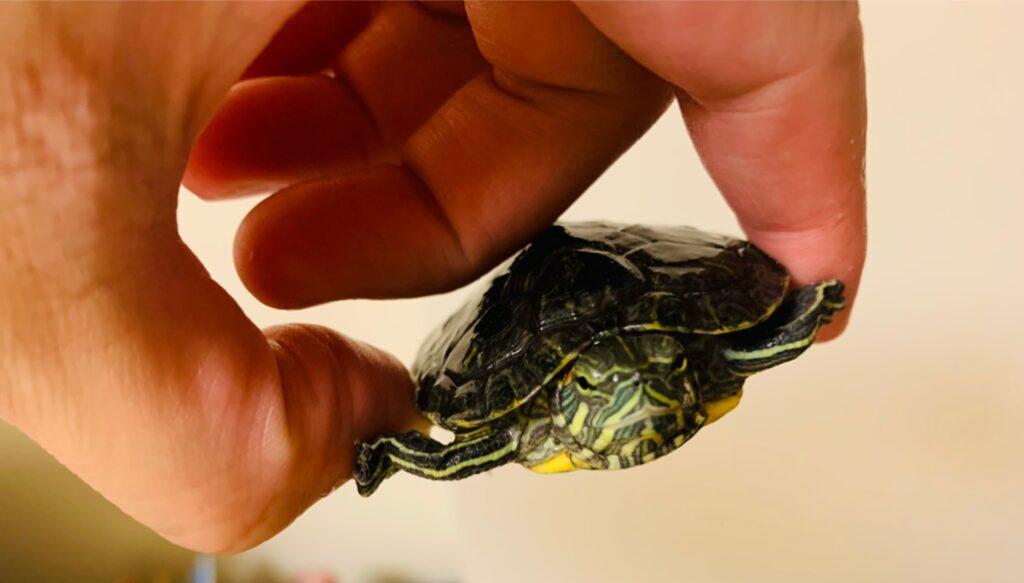 放烏龜在幼童身上爬等不當管教行為,犯什麼罪? 2